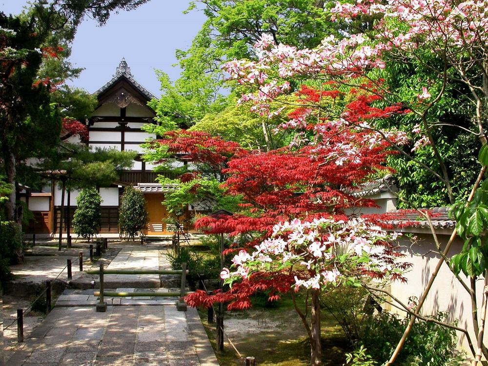 Imagen en primavera con todos los árboles en flor en la entrada del Templo de Tenru-ji