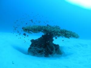 ¡Bajo el mar!
