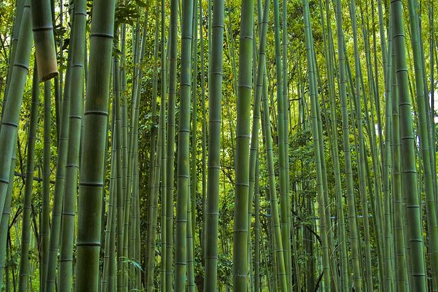 Bosque de bambú gigante de Sagano en Arashiyama, Kioto