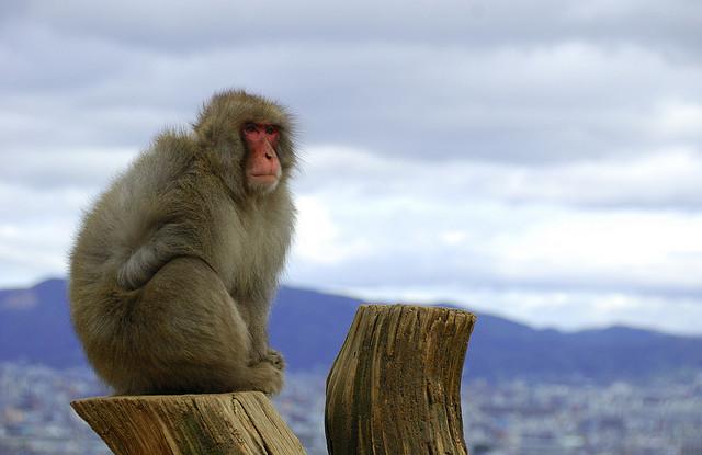 Mono posando ante las vistas del parque de los monos de Iwatayama