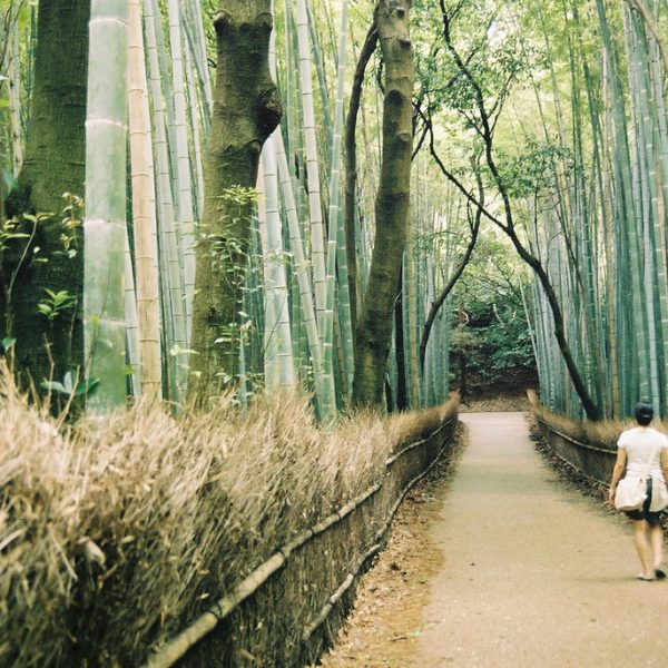 Bosque de bambú en Arashiyama
