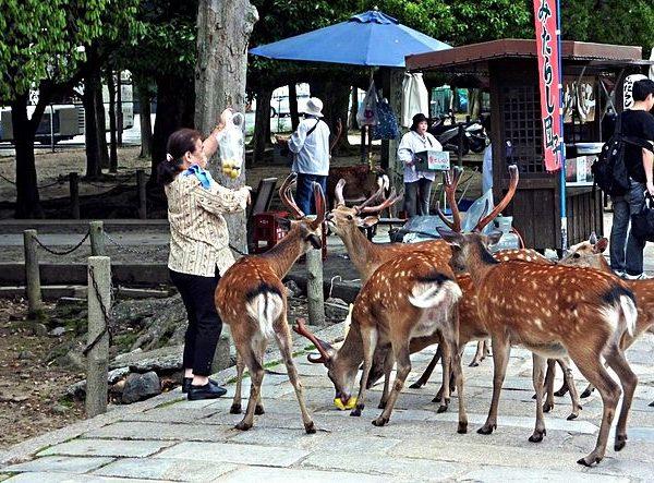 Ciervos a la entrada del Todaiji en Nara.
